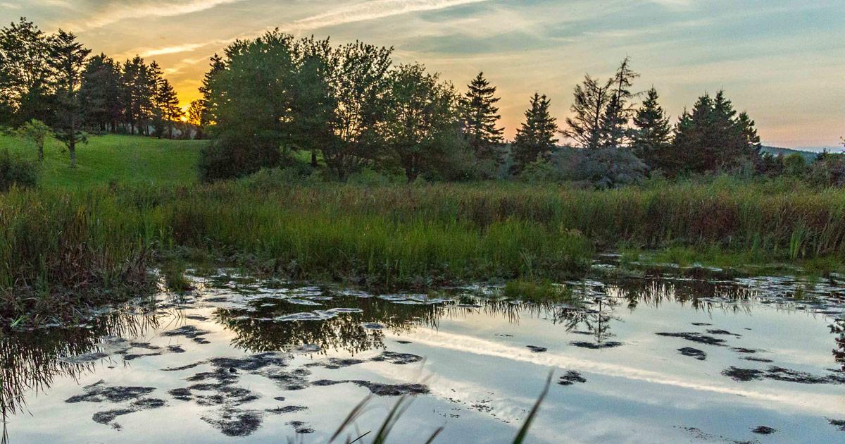 Nature - Guysborough